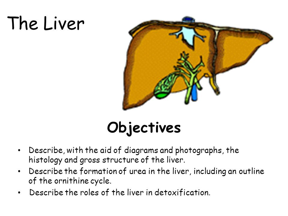 The Liver Objectives Describe With The Aid Of Diagrams And