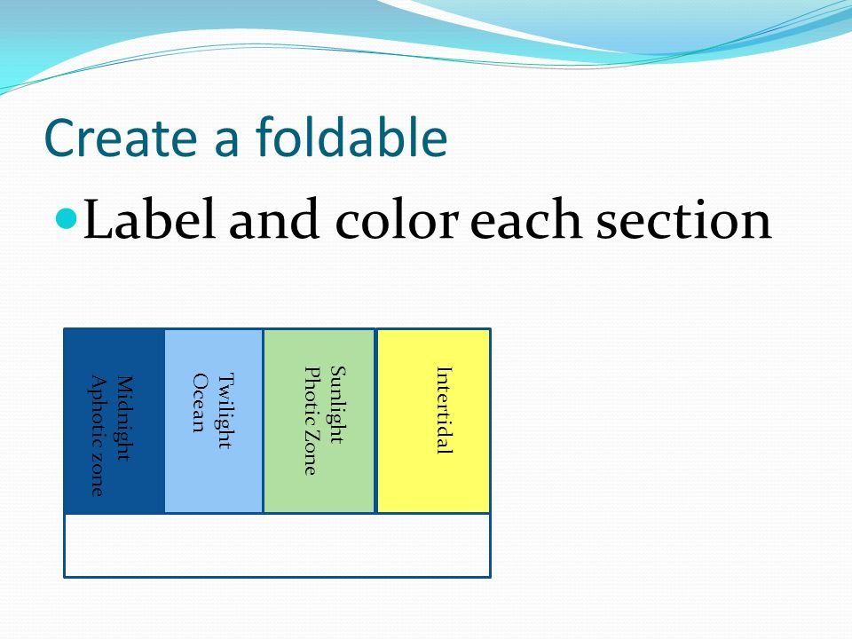 Create a foldable Label and color each section Intertidal Sunlight
