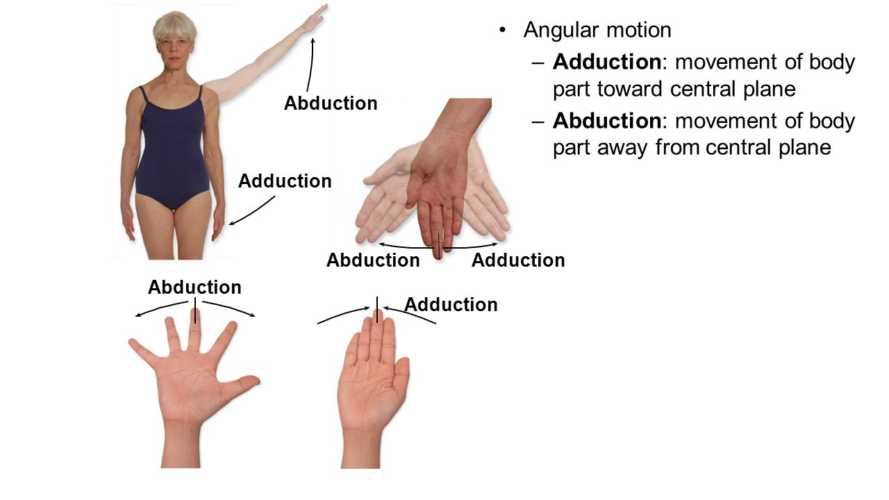 Adduction Definition Of Adduction By Medical Dictionary 1065558