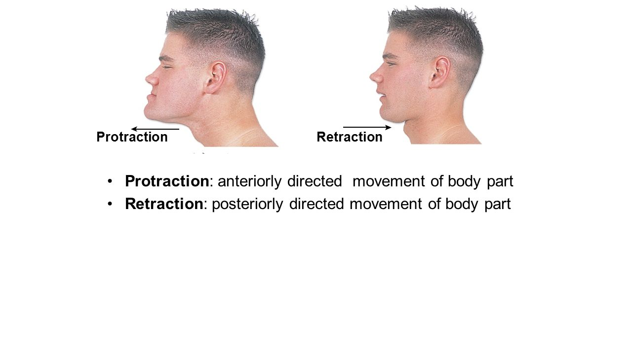 Protraction Movement Images - Reverse Search