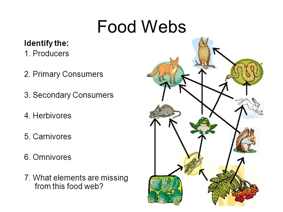 Chaparral Food Chains and Food Webs - ppt video online ...