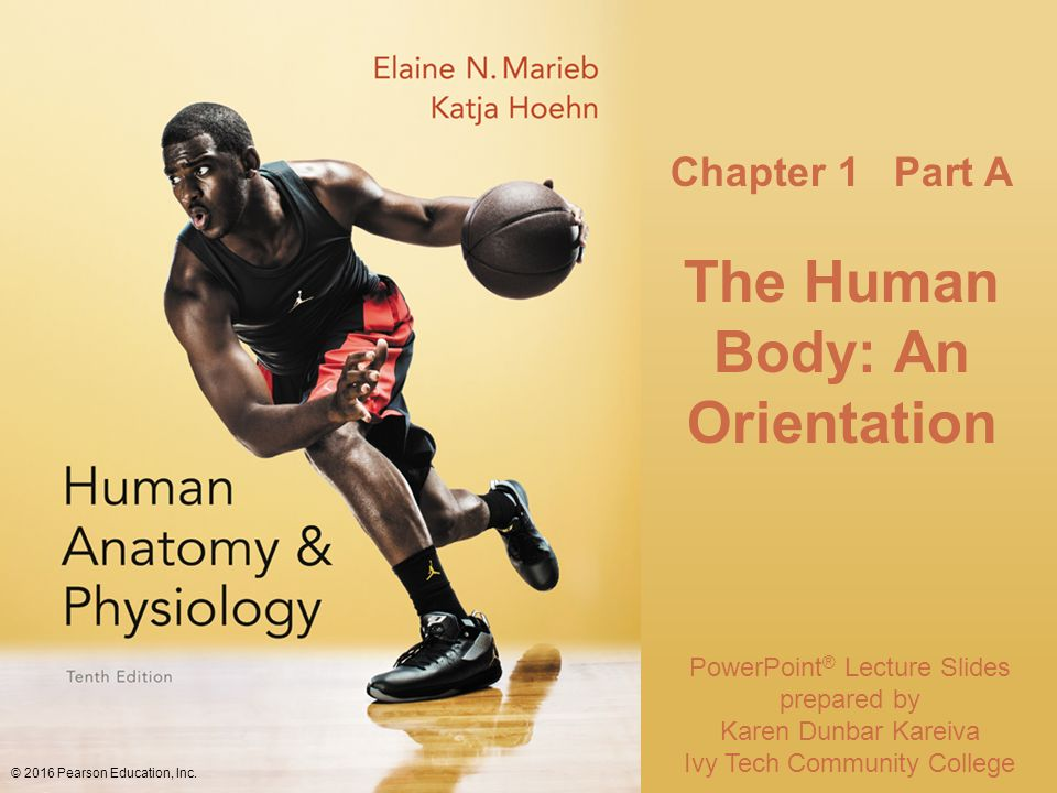 Fancy Human Anatomy And Physiology Powerpoint Pearson Festooning ...