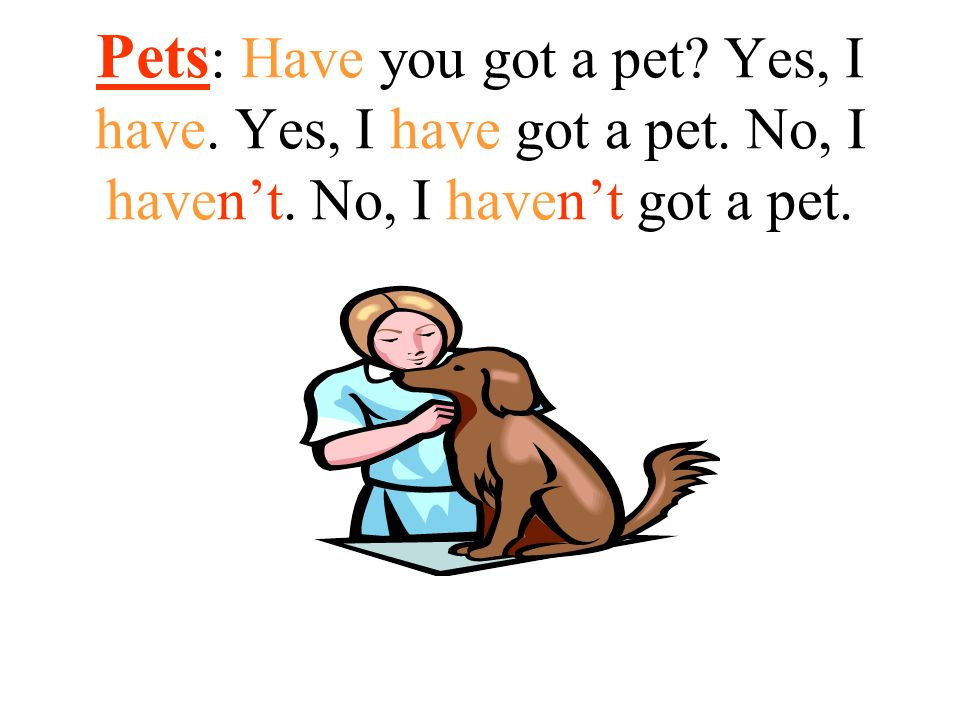 Pets: Have you got a pet. Yes, I have. Yes, I have got a pet