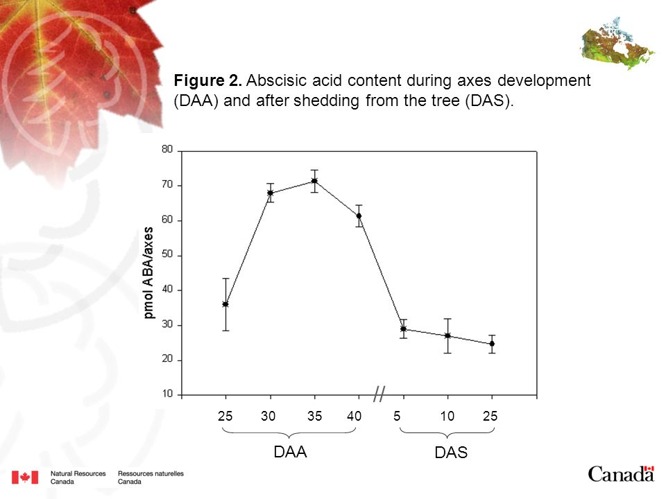 // Figure 2. Abscisic acid content during axes development
