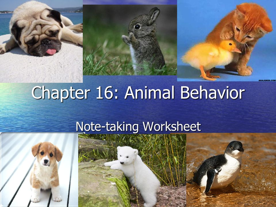 Chapter 16 Animal Behavior Ppt Video Online Download