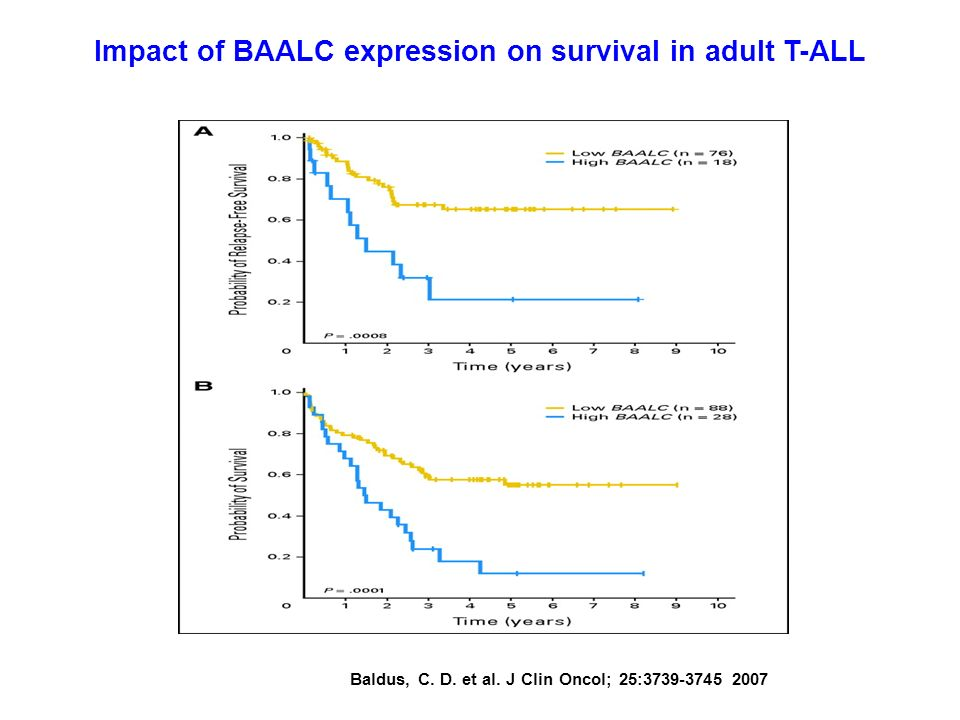 Impact of BAALC expression on survival in adult T-ALL