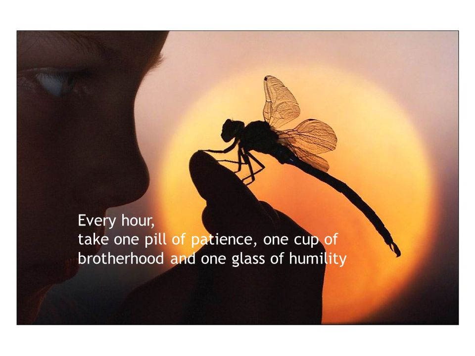 Every hour, take one pill of patience, one cup of brotherhood and one glass of humility