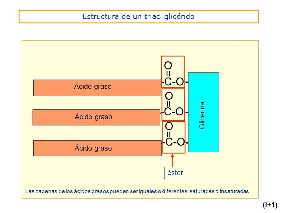 Estructura de un triacilglicérido