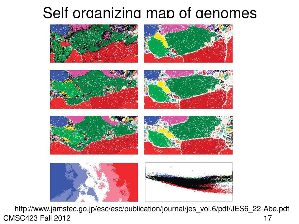 Self organizing map of genomes