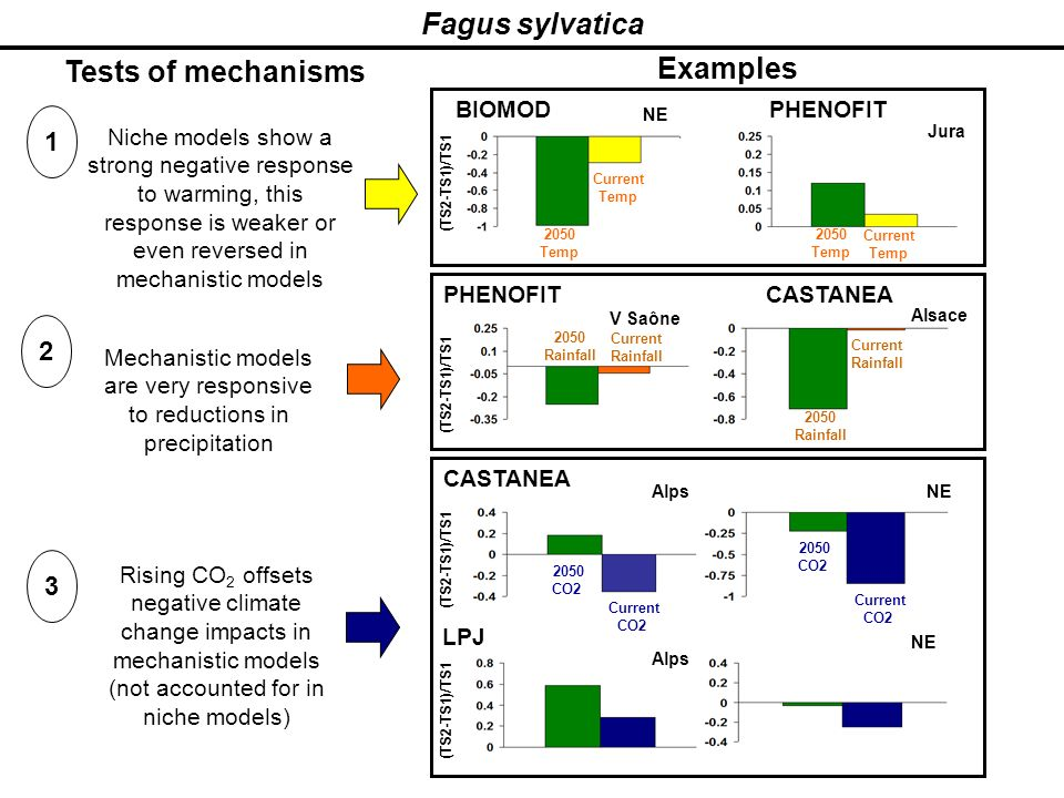 Fagus sylvatica Tests of mechanisms Examples