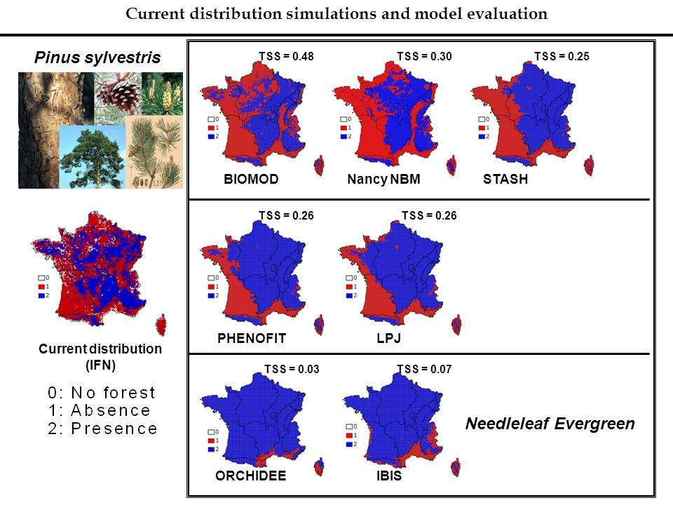 Current distribution simulations and model evaluation