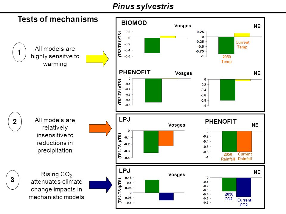 Pinus sylvestris Tests of mechanisms