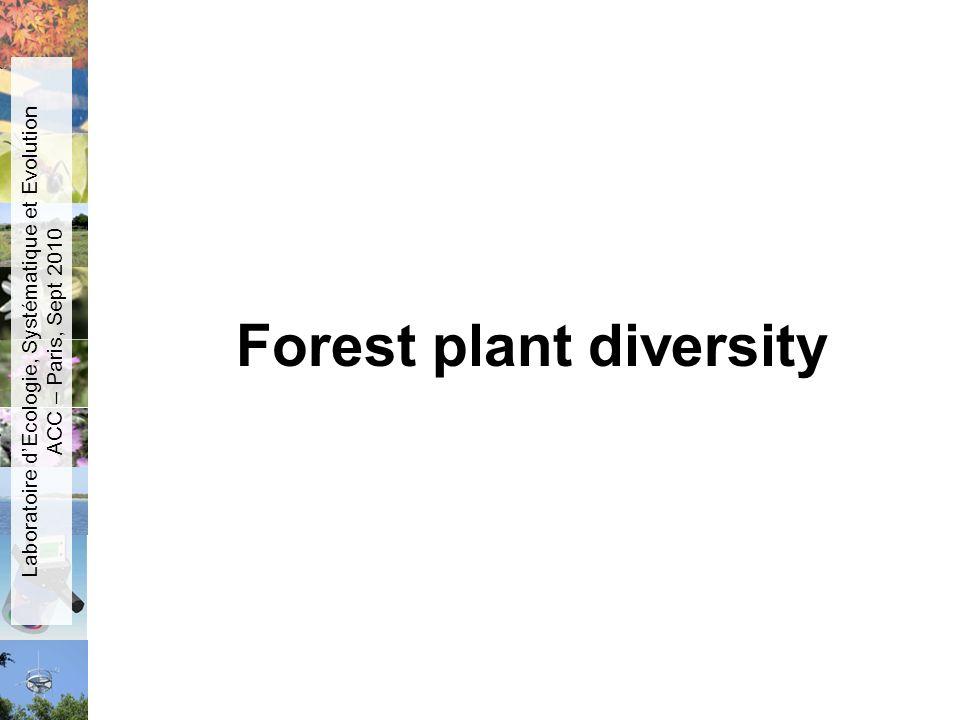 Forest plant diversity
