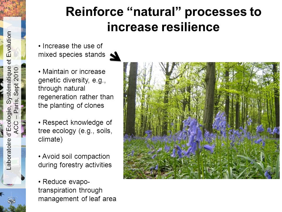 Reinforce natural processes to increase resilience