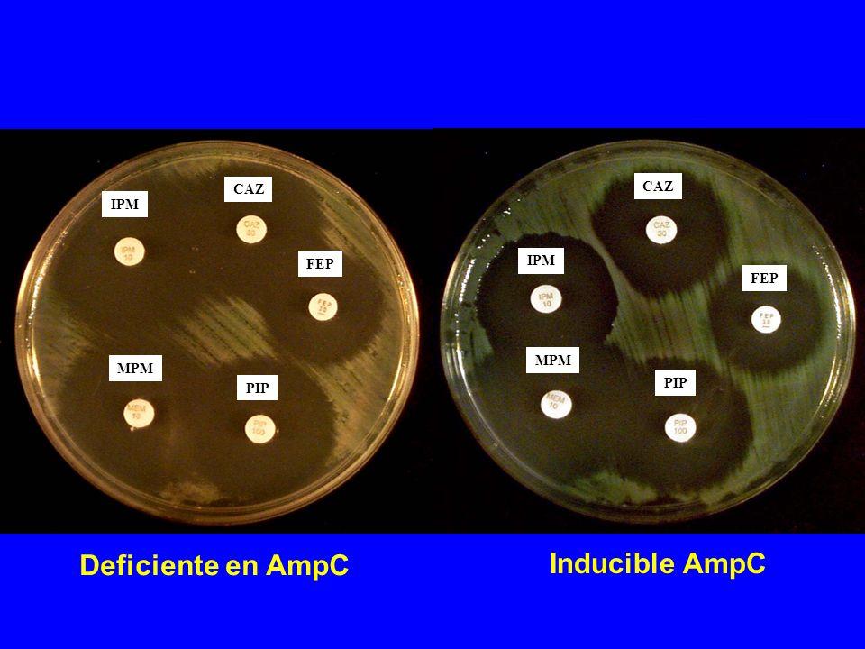 Deficiente en AmpC Inducible AmpC CAZ CAZ IPM IPM FEP FEP MPM MPM PIP