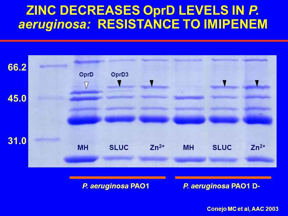 ZINC DECREASES OprD LEVELS IN P. aeruginosa: RESISTANCE TO IMIPENEM