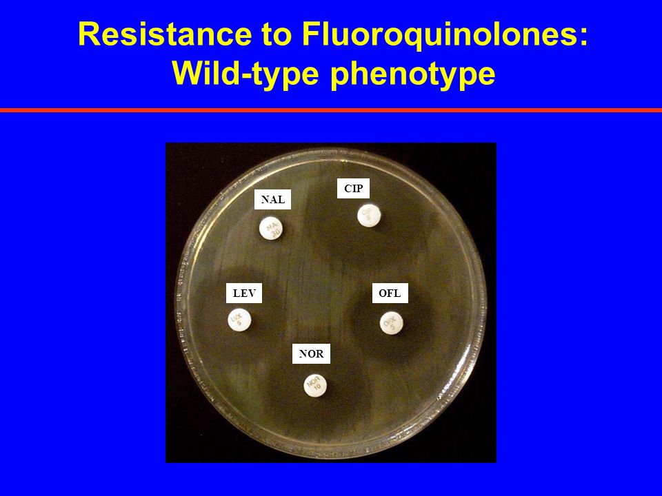 Resistance to Fluoroquinolones: Wild-type phenotype