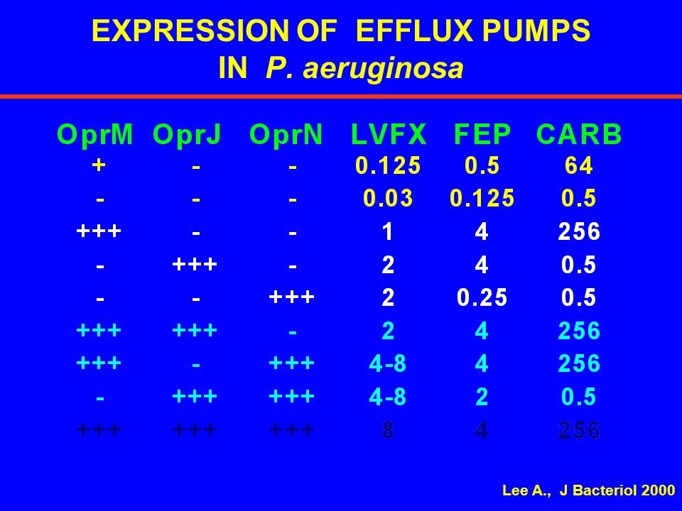 EXPRESSION OF EFFLUX PUMPS IN P. aeruginosa
