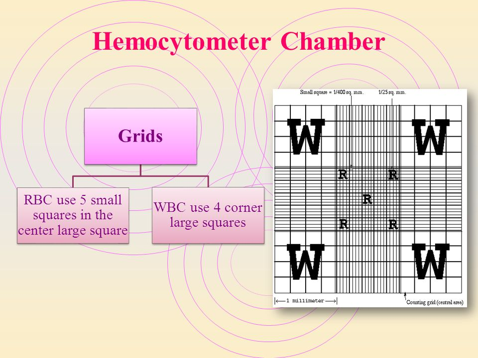 WBC manual count using Hemocytometer - ppt video online ...