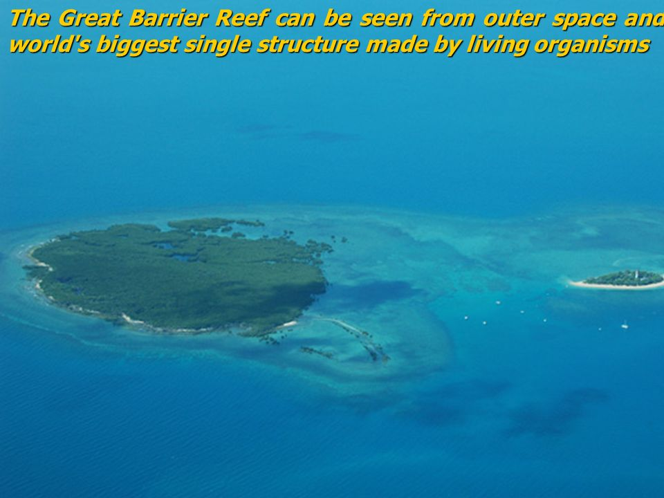 The great barrier reef the great barrier reef homereading for What is outer space made of