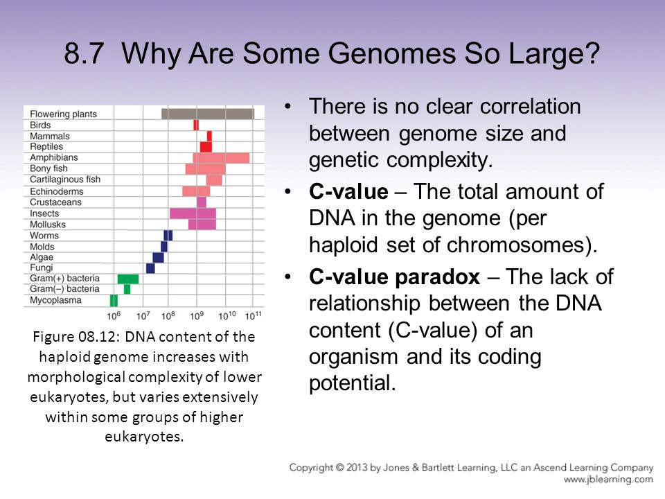 relationship between genome size and number of genes in ebola