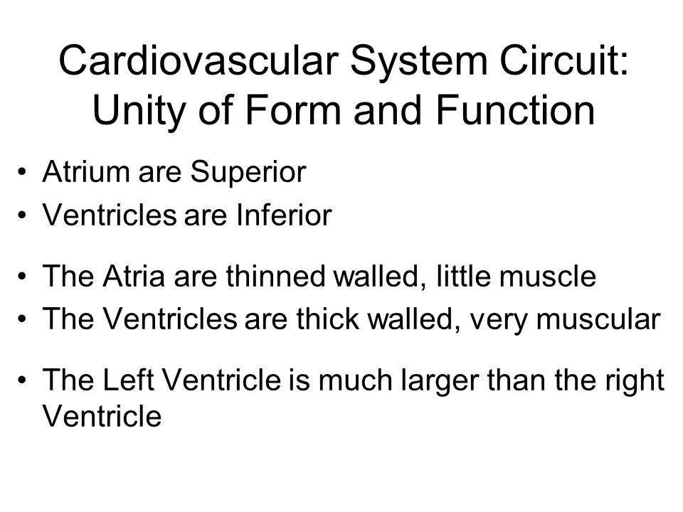 Cardiovascular System Circuit: Unity of Form and Function
