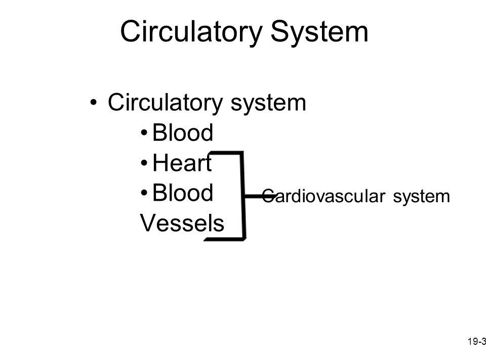 Circulatory System Circulatory system Blood Heart Vessels