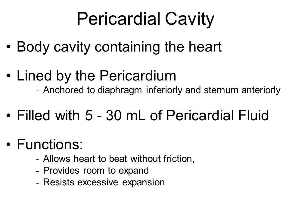 Pericardial Cavity Body cavity containing the heart
