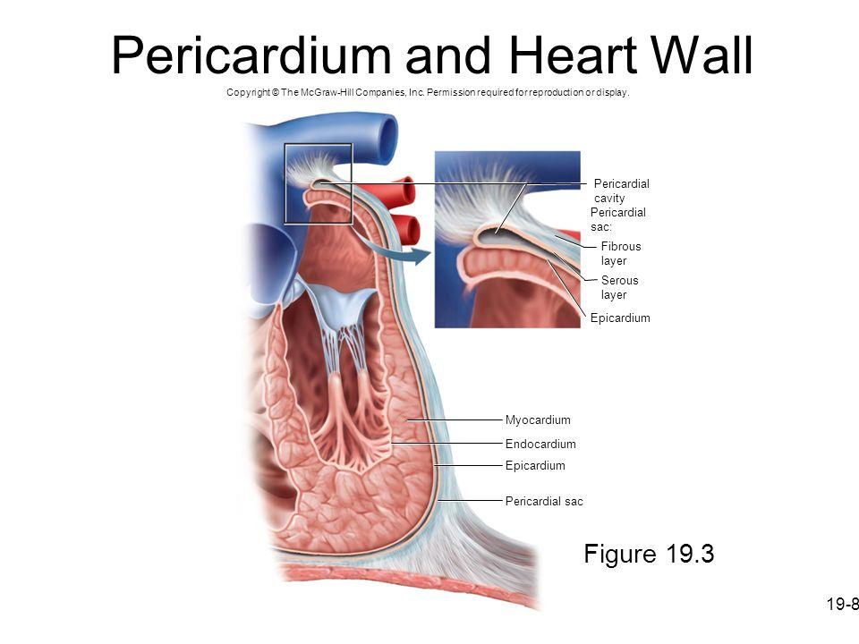 Pericardium and Heart Wall