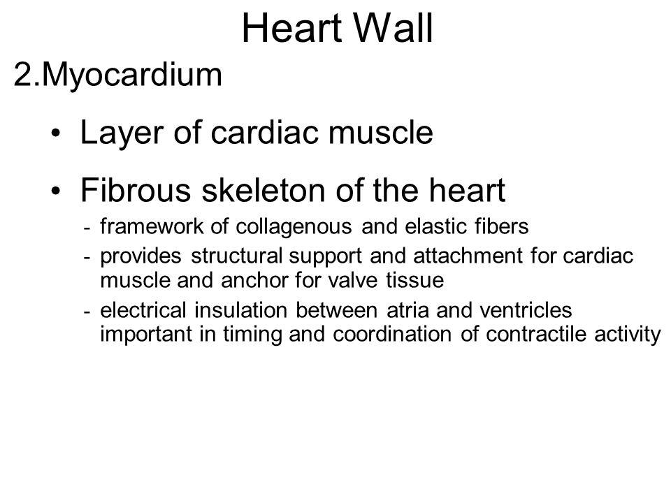 Heart Wall Myocardium Layer of cardiac muscle
