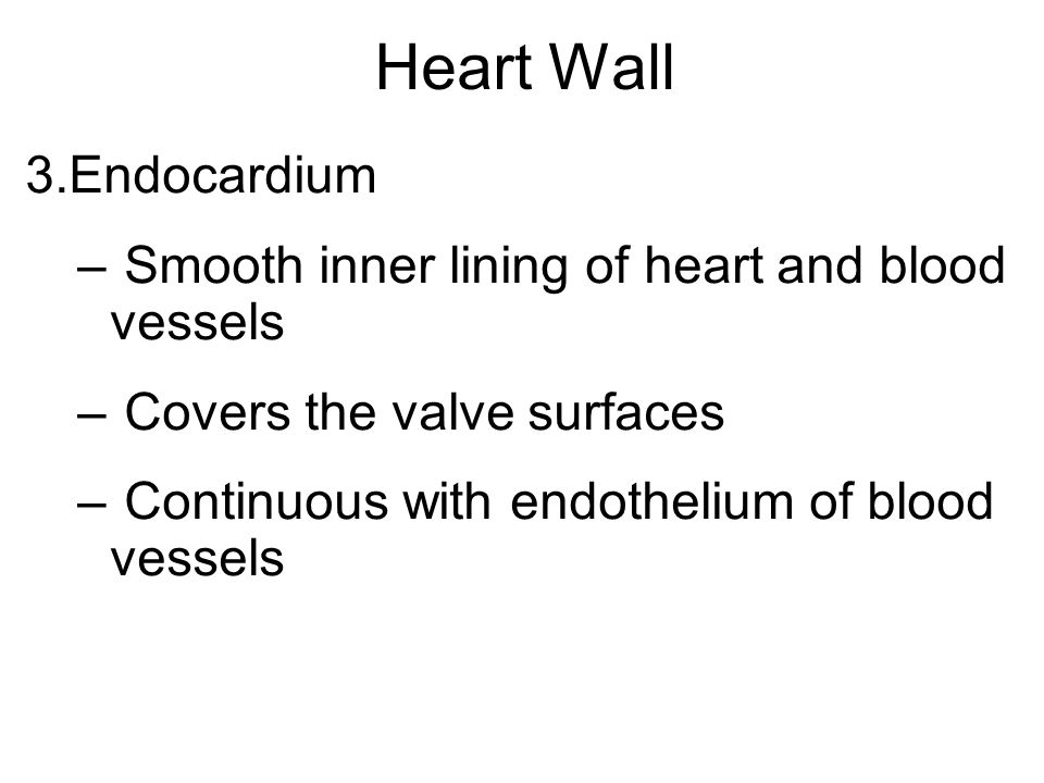 Heart Wall Endocardium Smooth inner lining of heart and blood vessels