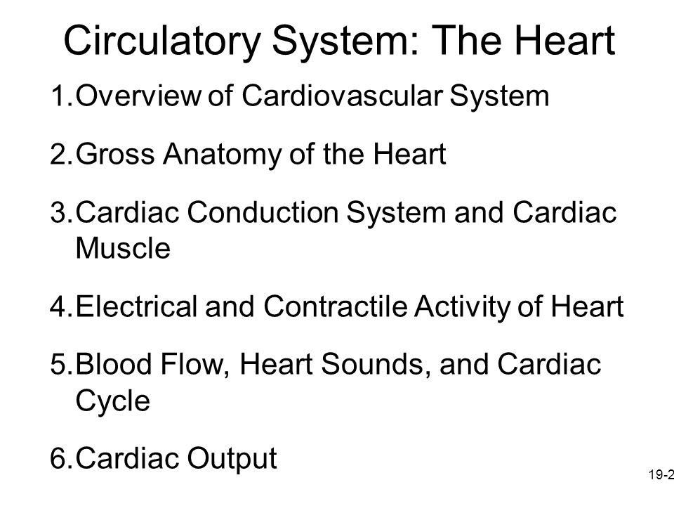 Circulatory System: The Heart