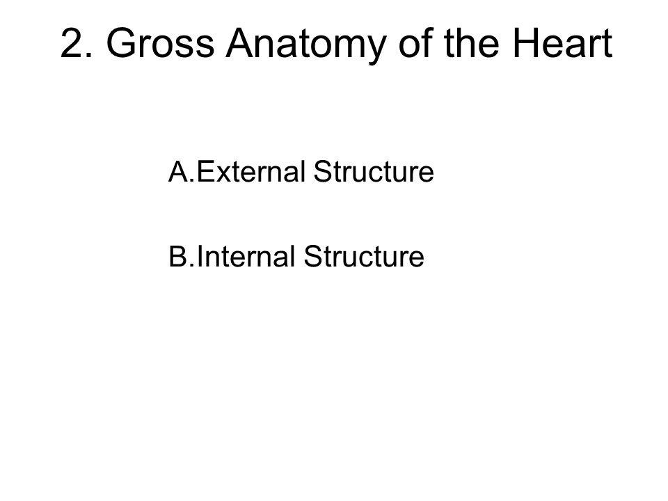 2. Gross Anatomy of the Heart