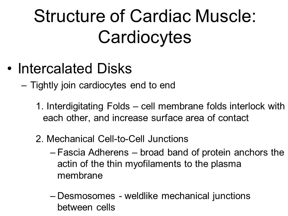 Structure of Cardiac Muscle: Cardiocytes