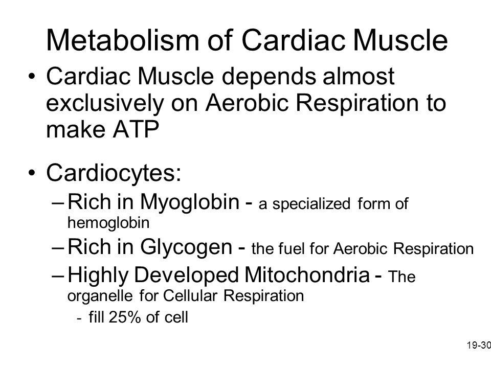 Metabolism of Cardiac Muscle