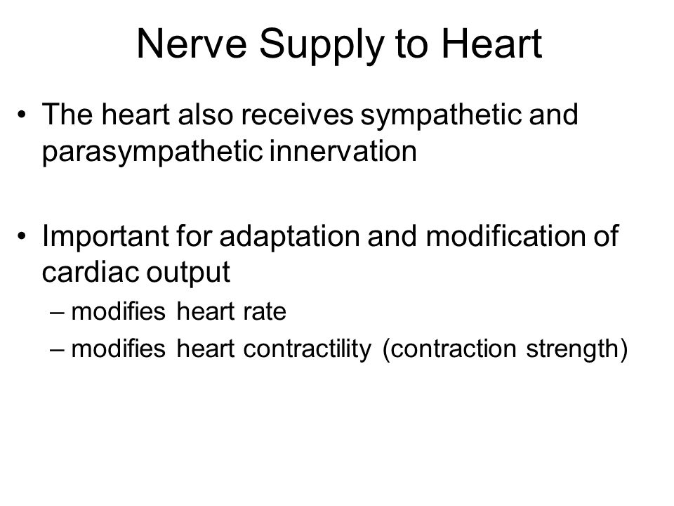 Nerve Supply to Heart The heart also receives sympathetic and parasympathetic innervation.
