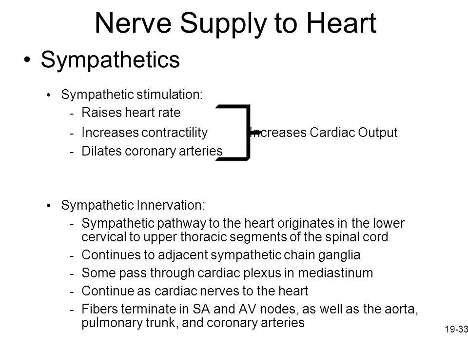 Nerve Supply to Heart Sympathetics Sympathetic stimulation: