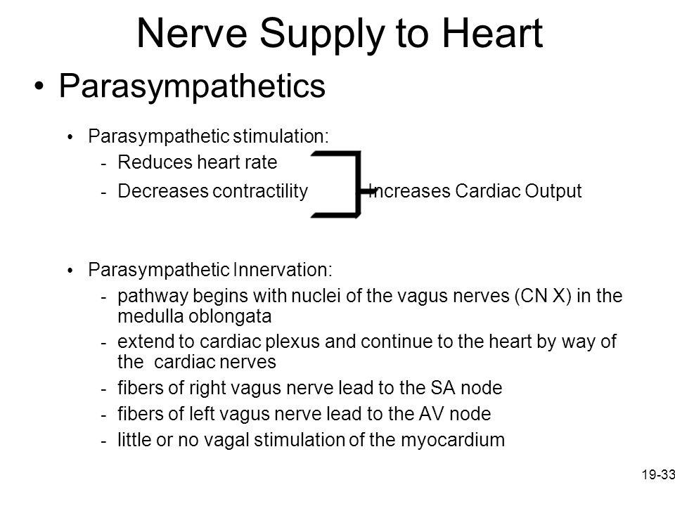 Nerve Supply to Heart Parasympathetics Parasympathetic stimulation: