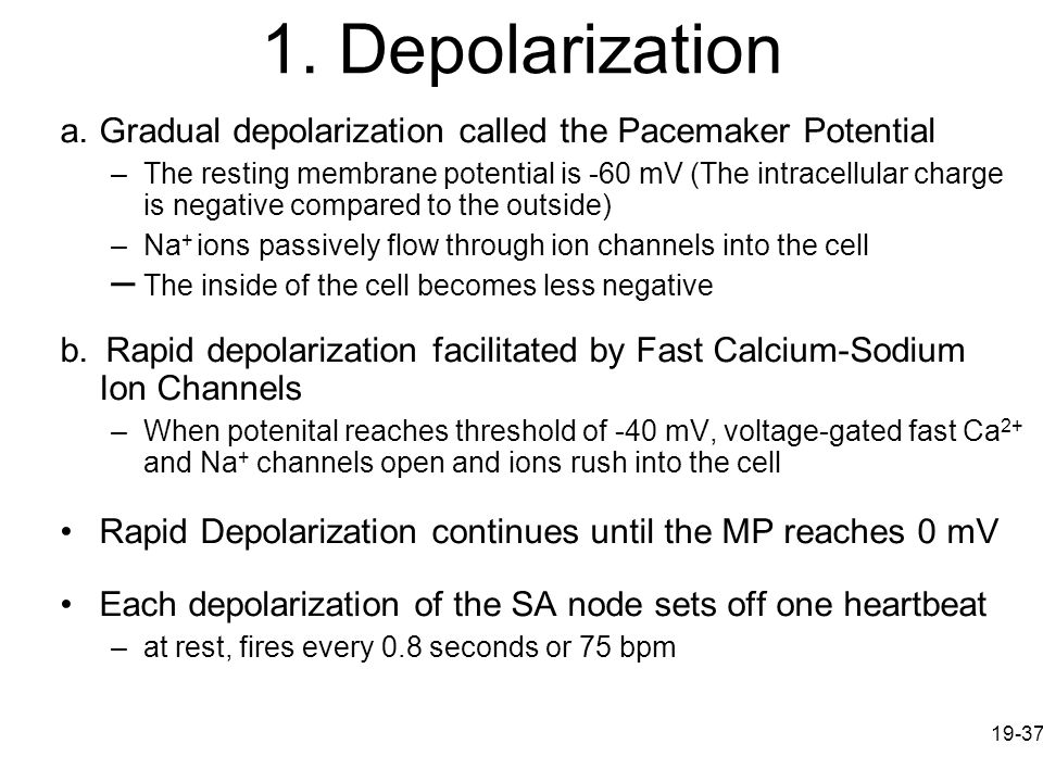 1. Depolarization The inside of the cell becomes less negative