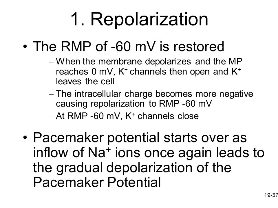 1. Repolarization The RMP of -60 mV is restored