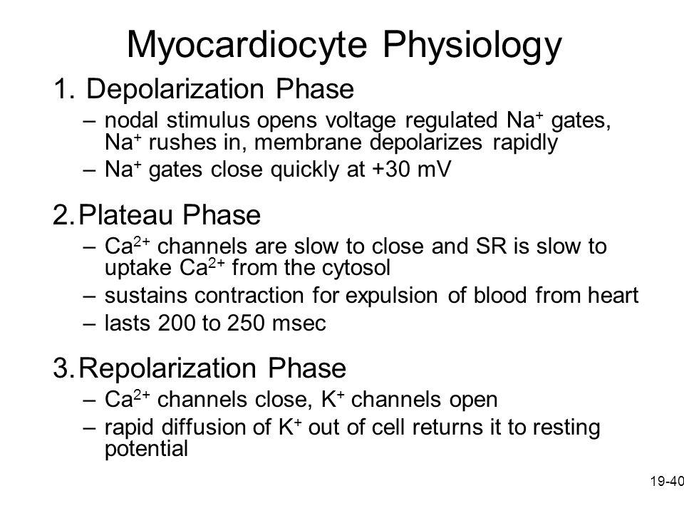Myocardiocyte Physiology