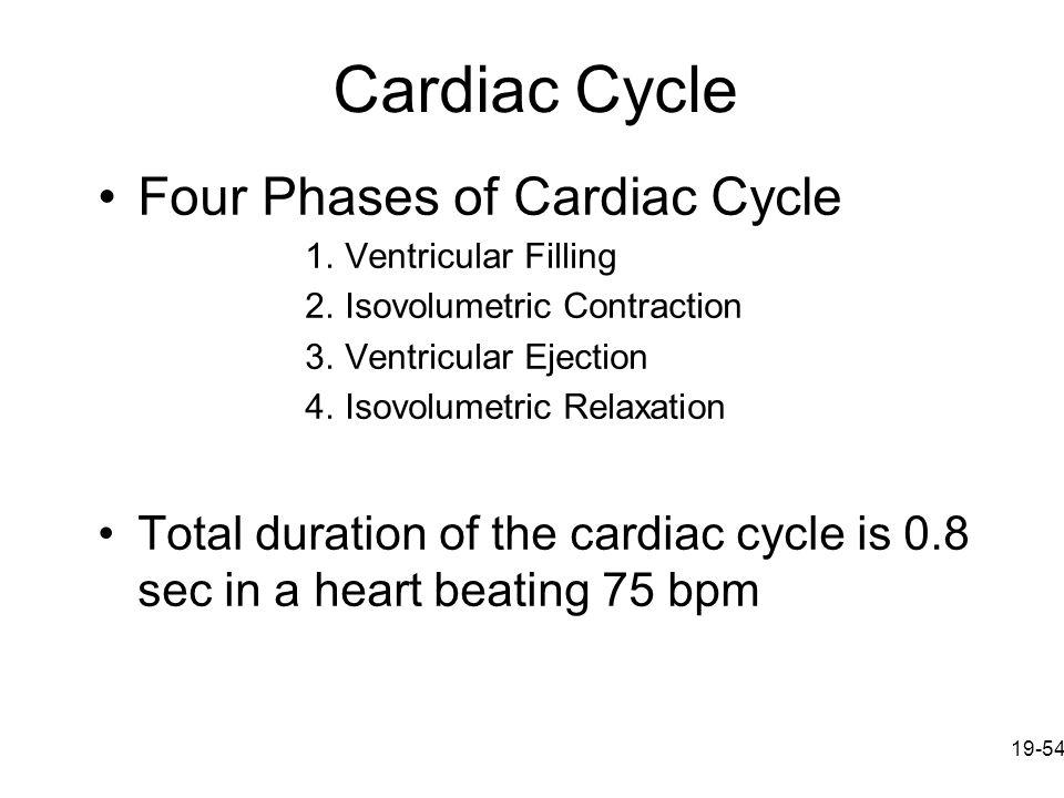Cardiac Cycle Four Phases of Cardiac Cycle