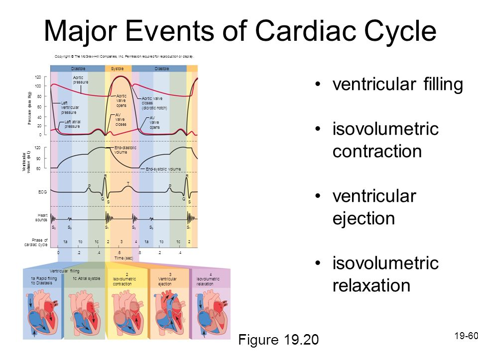 Major Events of Cardiac Cycle