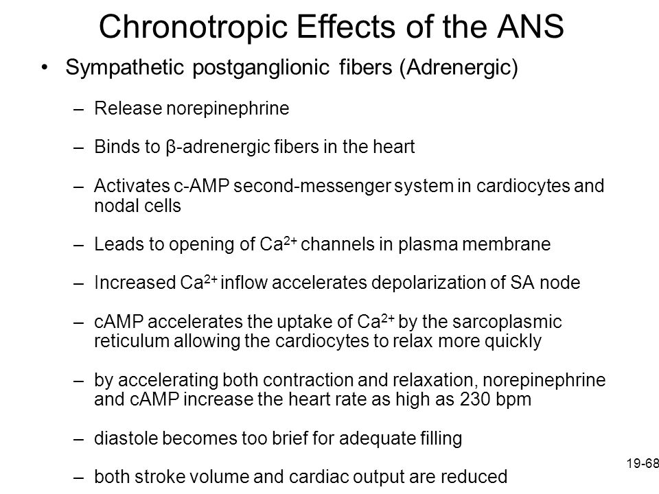 Chronotropic Effects of the ANS