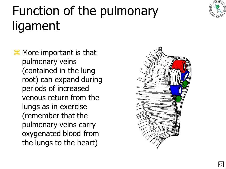 the pleura by dr. akram abood jaffar december ppt video online, Human Body