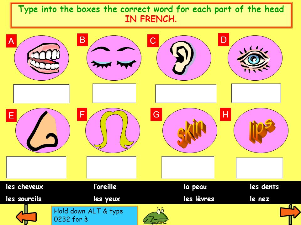 Type into the boxes the correct word for each part of the head IN FRENCH.