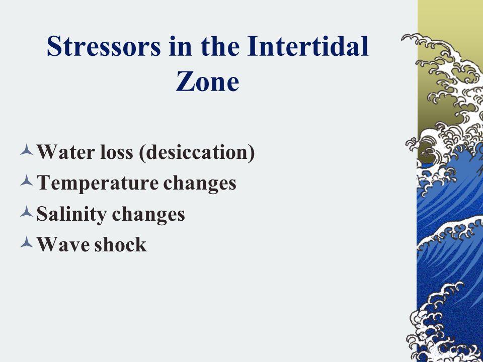 Stressors in the Intertidal Zone