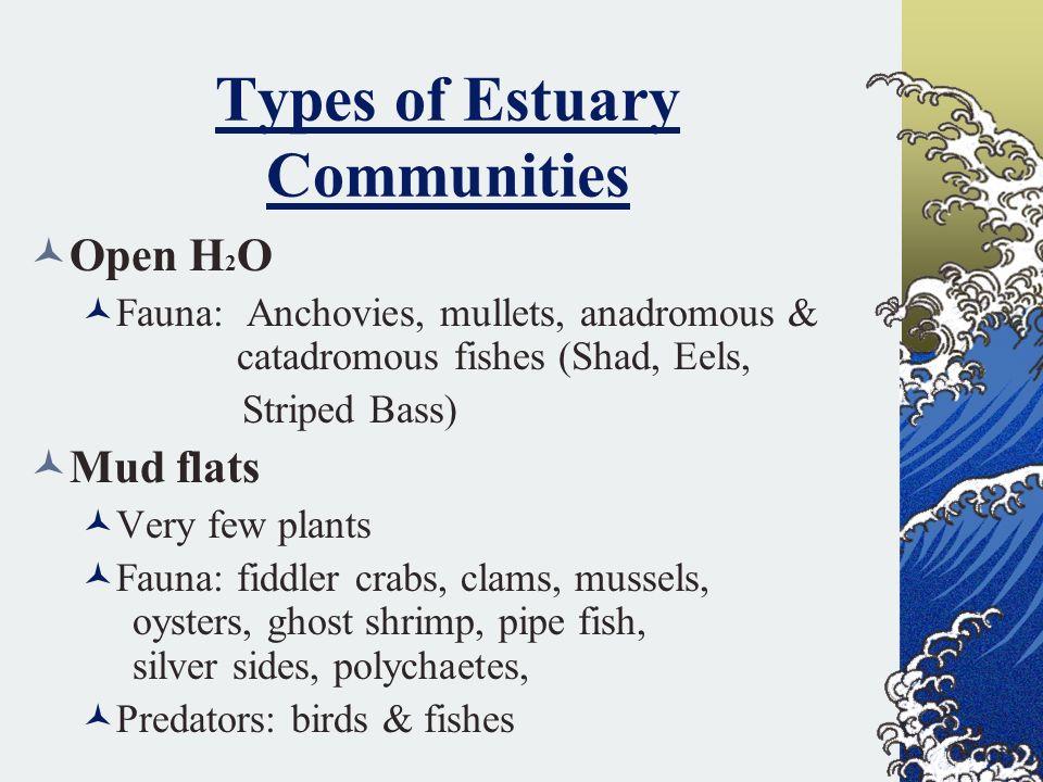 Types of Estuary Communities