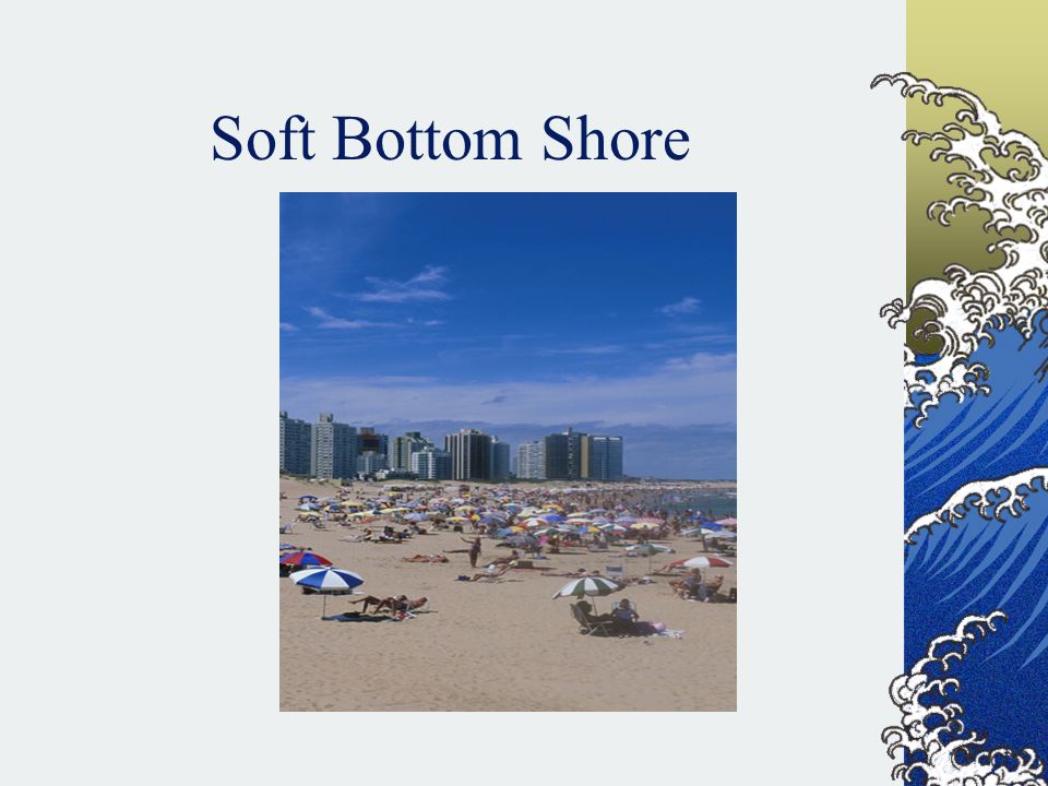 Soft Bottom Shore