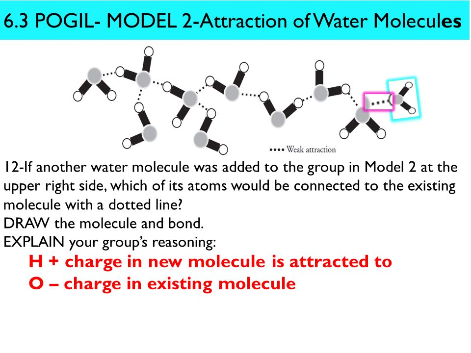 6.3 POGIL- MODEL 2-Attraction of Water Molecules